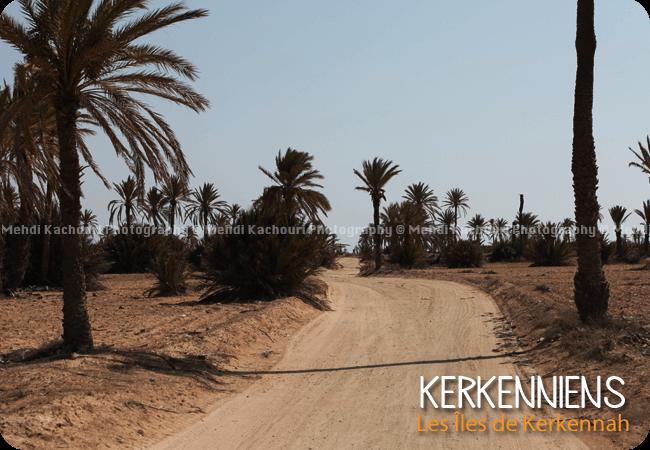 Un des 13 villages de kerkennah : Mellita - Photo 3