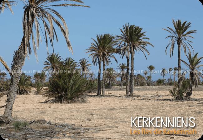 Un des 13 villages de kerkennah : Mellita Photo 4