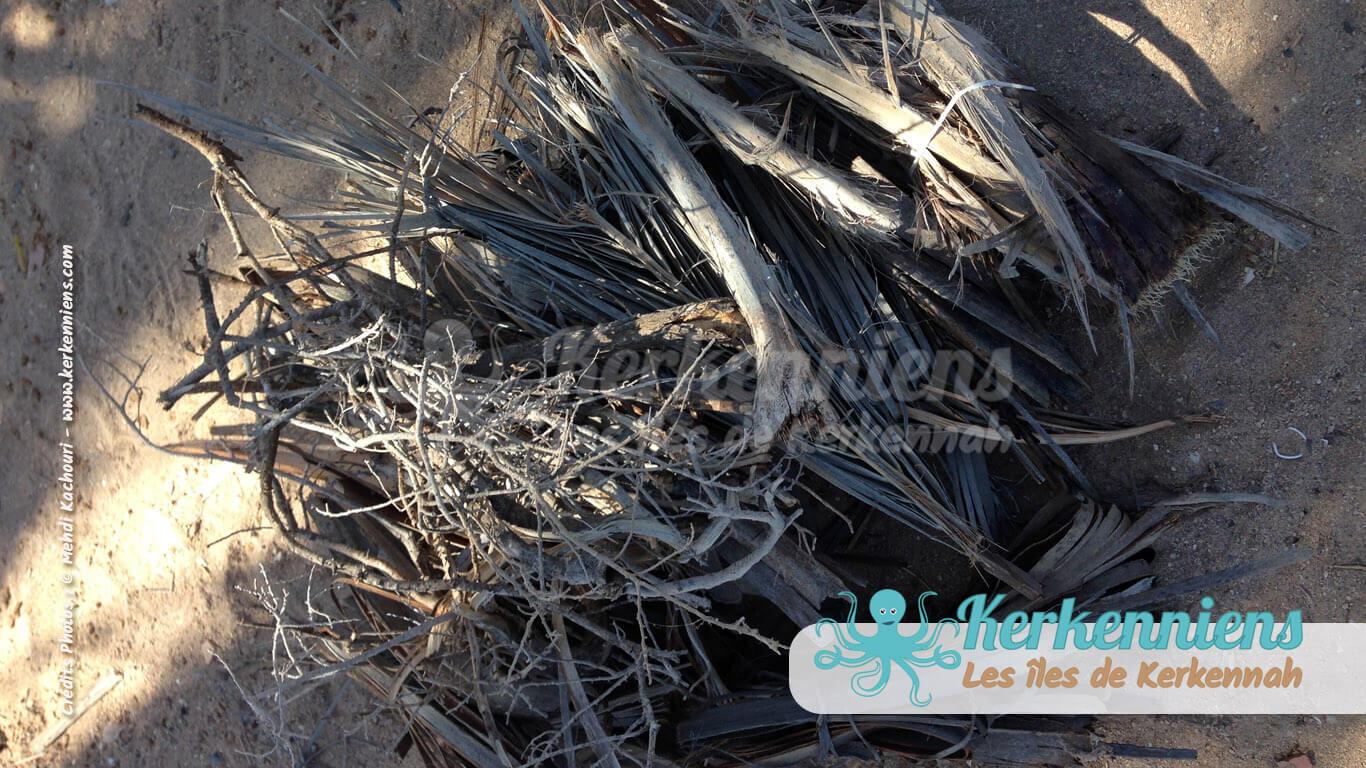 Arjoun (spadices de palmier) idéal pour la fabrication d'objets et pour préparer un feu de barbecue sur la plage