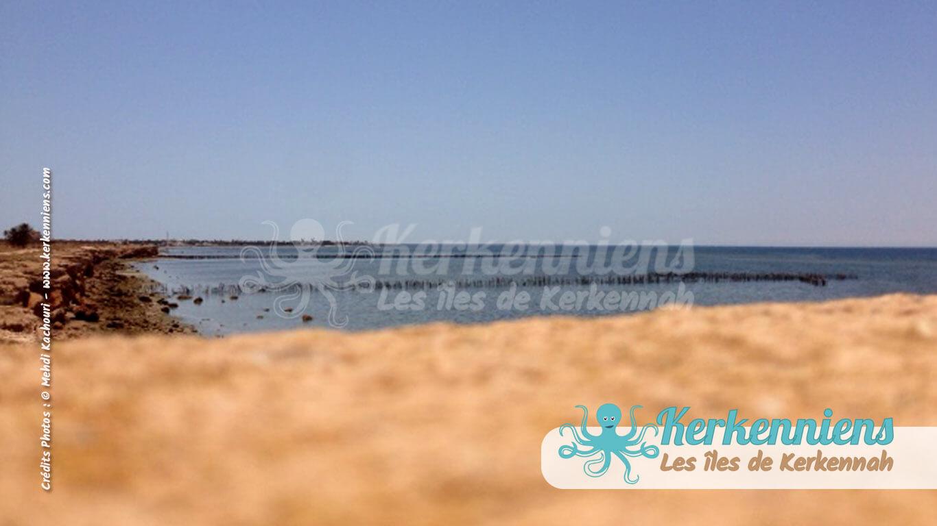 Kerkennah, du ciel à la mer, terre sauvage Kerkennah (Tunisie)