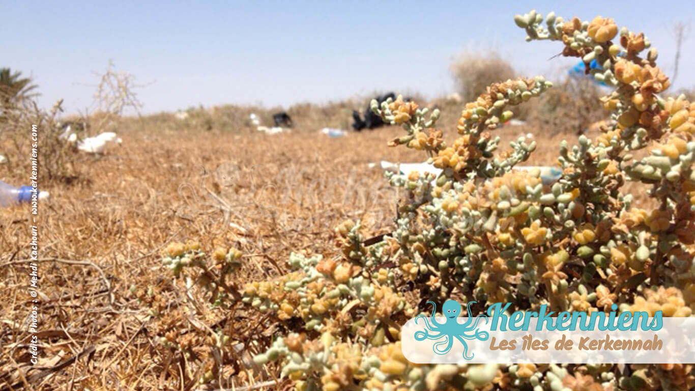 Terre sauvage et horizon plastique Kerkennah (Tunisie)