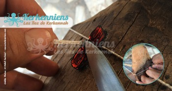 Construire une flouka kerkennienne Fixer le Sarri (mât) avec de la corde