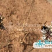 Faune flore des terres salines de Kerkennah