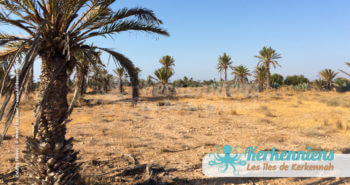 La nature sauvage et la palmeraie (rhabba fi kerkena)