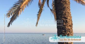Le palmier au bord de l'eau