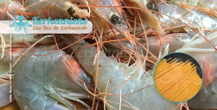 Recette de cuisine Spaghettis aux crevettes