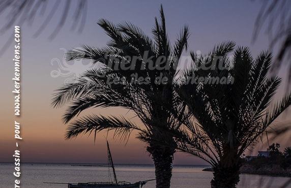 Duo de palmiers fidèles à la mer et au vent