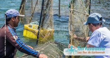 Charfia, dans tes filets le courant annonce une pêche miraculeuse