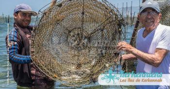 La drina, enclos naturel des poulpes et des poissons de méditerranée