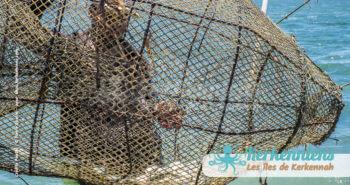 Drina Charfia poissons paraclet (Sbares) Kerkennah juin 2016 - Pierre Gassin