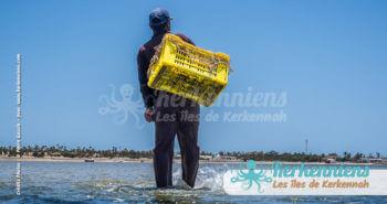 Pêche marée basse charfia Kerkennah juin 2016 - Pierre Gassin
