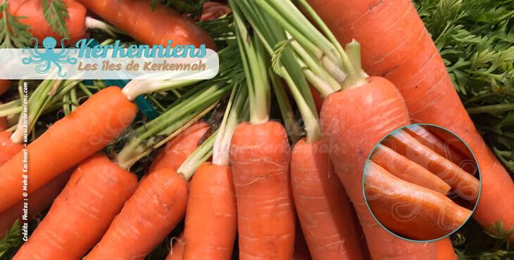 Recette de cuisine salade de carottes piquante Omek Houria - Les carrottes