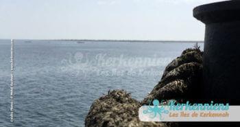 Arrivée au port de Sidi Youssef Kerknnah