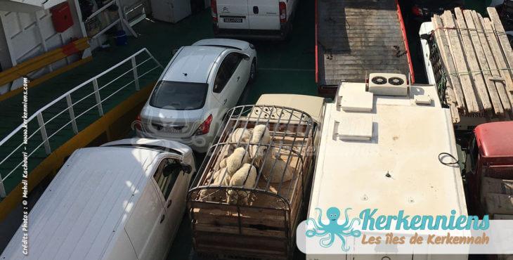 Camionnette de moutons sur le babour de Kerkennah