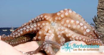 Kerkennah, le forum d'Octopus est ouvert