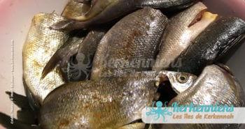 poissons chelba kerkennah barbecue