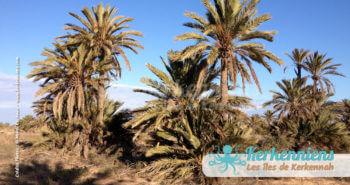 Ghaba (forêt) de Kerkennah (Décembre 2012)