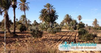 Ghaba (forêt) de Karkna (Décembre 2012)