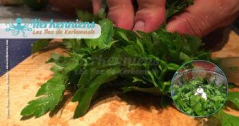 Recette cuisine : couper la coriandre fraiche (bottes)