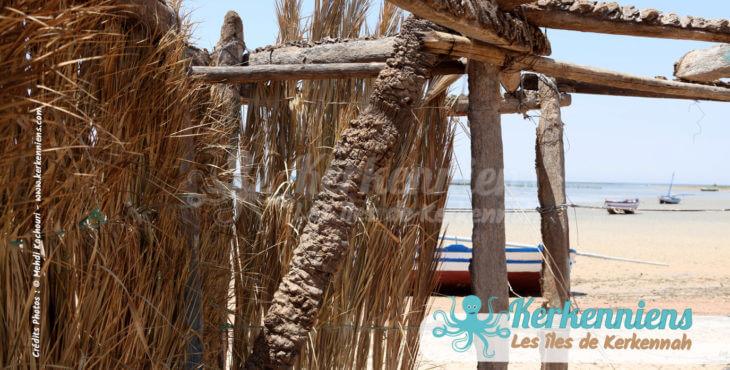 Kerkennah épique : Au cœur de l'histoire des civilisations de la méditerranée