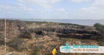 Destruction de la flore et des palmiers centenaires