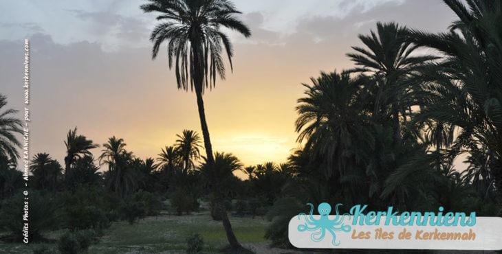 Terre de Kerkennah par Imèn et Ahmed Kaaniche