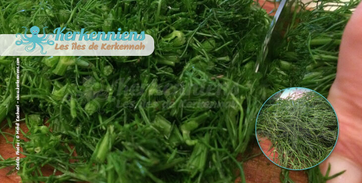 Fanes (besbès) de fenouil coupées finement pour le couscous bel besbès et chouabi la recette de cuisine