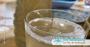 Legmi vin du palmier boisson alcoolisée sirupeux blanchâtre fermentation palmiers dattiers