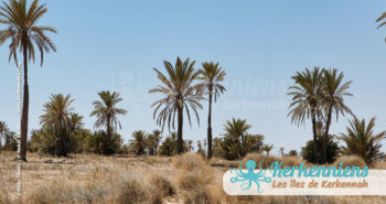 Kerkennah oasis développement durable Tunisie