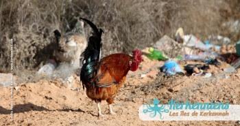 25 Mars 2012: C'est du propre en Tunisie et à Kerkennah Tunisie