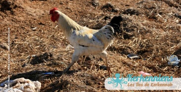 25 mars 2012: Grande journée de nettoyage à Kerkennah Tunisie