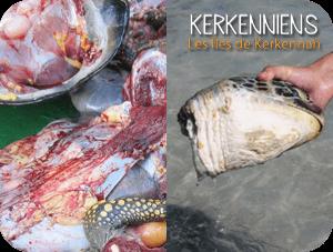 Arrêtons le massacre des tortues de Kerkennah Kerkena
