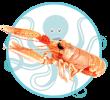 Crustacés et Fruits de mer de Méditerranée Langoustine Neghoustine Kerkennah Tunisie
