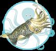 Crustacés et Fruits de mer de Méditerranée Seiche Soubya Chouabi Kerkennah Tunisie