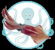 Crustacés et Fruits de mer de Méditerranée Calamar Habbar Mattik Kerkennah Tunisie