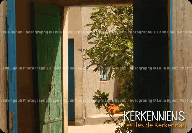 Figuier interieur patios Kerkennah – Photo de Leila Ayoub Kerkennienne
