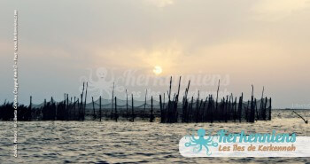 Liberta Cercina Sayyed Amiri charfiya pêcherie Kerkennah El Maghaza