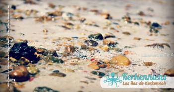 Liberta Cercina Sayyed Amiri chat ker plage sable Kerkennah El Maghaza