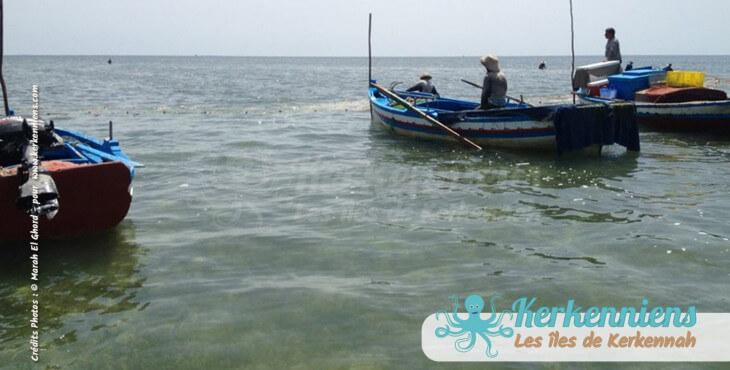 Pêche à la Sautade (Damassa)