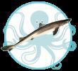 Poisson de Méditerranée Chien de mer Kalb el-bahr Kerkennah Tunisie