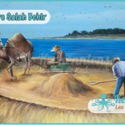 Salah Bchir Dromadaire récolte le blé Kerkennah