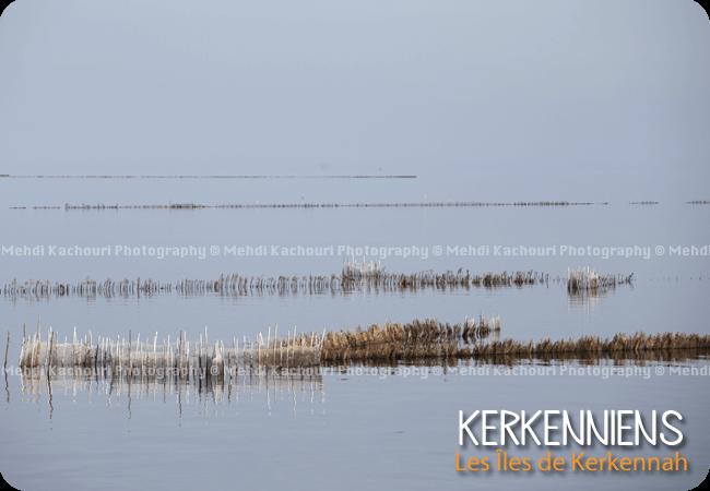 Charfia ou technique de pêcherie fixe des iles de Kerkennah