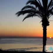 Palmiers au soleil couchant