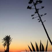 Coucher de soleil sur la flore