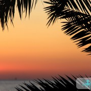 Palmes au soleil couchant