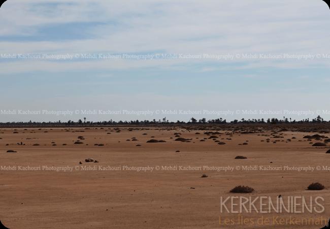 Découvrez l'Archipel de Kerkennah photo 8