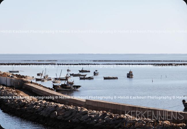 Départ pour Kerkennah : Traversée Sfax - îles de Kerkennah photo 11