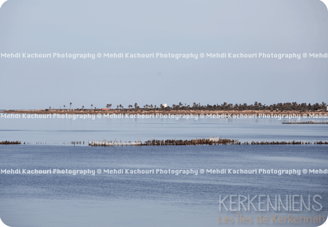 Départ pour Kerkennah : Traversée Sfax - îles de Kerkennah photo 10