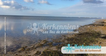 On bouge du côté de la zone Bourrous (Kerkennah)