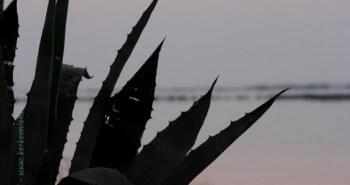 Album photos : Faune et flore des Iles de Kerkennah